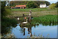 TG1630 : Swans on pond at White House Farm by Peter Barr