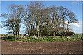 NK0457 : Netherton of Logie Recumbent Stone Circle (1) by Anne Burgess