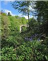 NZ2741 : Durham: bluebells by the Wear by John Sutton