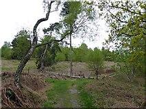 SK2563 : Footpath along Stanton Moor by Steve  Fareham
