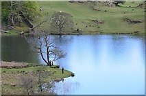 NY3404 : The shore of Loughrigg Tarn by Jim Barton