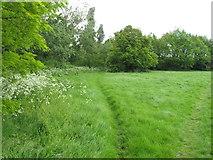 TQ2181 : Path through long grass, Old Oak Common by David Hawgood