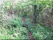 TQ2181 : Path in woodland, Old Oak Common by David Hawgood