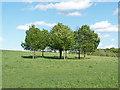 TQ0161 : Trees, McClaren Park by Alan Hunt