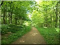 SK5278 : Whitwell Wood in mid May by Jonathan Clitheroe