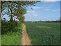 TL8524 : Arable field boundary near Purley Farm, Coggeshall by Roger Jones