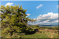 NY3300 : Above Tarn Hows by Ian Capper