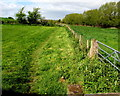 SO5824 : Herefordshire Trail in Bridstow by Jaggery