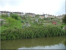 ST7564 : Canalside allotments between locks 12 and 11, Bath by Christine Johnstone