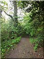 NZ2566 : Path in Jesmond Dene by Paul Gillett