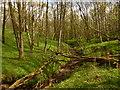 NY6616 : Stream in Hoff Lunn by David Medcalf