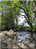 SX6094 : East Okement River upstream from Fatherford Bridge by David Smith