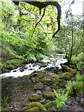 SX6094 : East Okement River upstream of Fatherford Bridge by David Smith