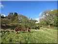 SX3670 : Old Farm Machine by Des Blenkinsopp