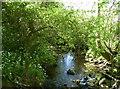 ST5964 : A gentle stream by Neil Owen