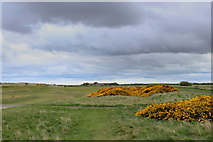 NU0545 : Hole 11, Goswick Golf Course by Chris Heaton