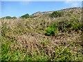 SW4838 : En Route Towards Trendrine Hill by Rude Health