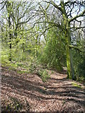 SE0722 : Footpath in North Dean Wood, passing Upper Tinker Hey, Greetland by Humphrey Bolton
