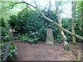 SP9134 : Bow Brickhill by Rude Health