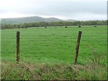 NY2436 : Plantation near Scawthwaite Mire by Christine Johnstone