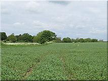 TL9249 : Arable land near Nether Hall, Lavenham by Roger Jones