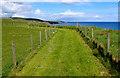NT9857 : The Coastal Path above Marshall Meadows Point by Chris Heaton