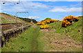 NT9658 : Coastal Path beside the East Coast Mainline (1) by Chris Heaton