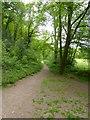 SS9028 : Exe Valley Way in Burridge Woods by David Smith