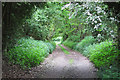 TM0336 : Track to Mill House, Higham by Roger Jones