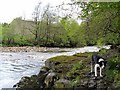 NY7145 : Riverside near site of Bridgend Mill by Andrew Curtis