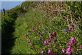 SN0239 : Pembrokeshire Coast Path along the east side of Aber Fforest by Christopher Hilton