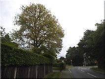 TQ0165 : Lyne Lane at the junction of Longcross Road by David Howard
