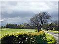NY3168 : Pasture near Hill House by John Lucas