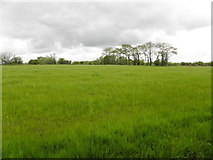H5173 : Cloudy skies, Killycurragh by Kenneth  Allen