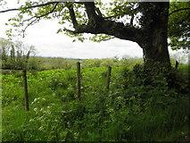 H5173 : Killycurragh Townland by Kenneth  Allen