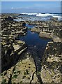 HY4553 : Rock Pool, Bow Head, Westray, Orkney by Claire Pegrum