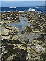 HY4653 : Rock Pool, Bow Head, Westray, Orkney by Claire Pegrum