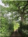 ST5262 : Lane to Butcombe by Derek Harper