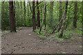 SU9357 : Woods near Alexander Barracks by Alan Hunt