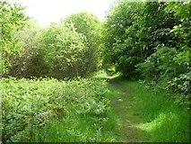 SH5637 : Public footpath to Borth y Gest by Christine Johnstone