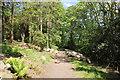 SH5269 : Woodland Walk at Plas Newydd by Jeff Buck