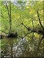 ST6377 : River Frome by Derek Harper