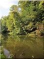 ST6376 : River Frome by Derek Harper