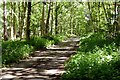 SK6164 : Path in Sherwood Forest by Graham Hogg