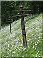 SK3706 : Disused Telegraph Poles South of Shackerstone Station by Keith Williams