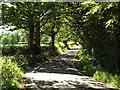 TQ6099 : Sunlight and shadows, Hay Green Lane near Wyatt's Green by Malc McDonald