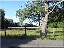 SU9567 : Field by Broomhall Farm, Sunningdale by David Howard