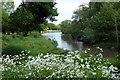 SK4564 : The Miller's Pond by Graham Hogg