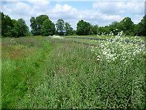 TQ4457 : Footpath to Old Harrow Lane by Marathon