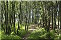 NO0200 : Path, Lendrick Muir woodland by William Starkey
